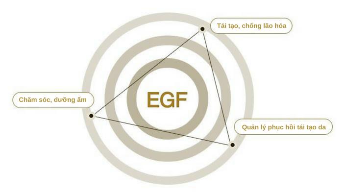 EGF là gì? - Dược mỹ phẩm SNP